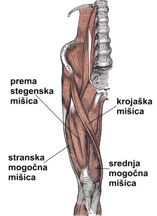 vastus lateralis injection steroids