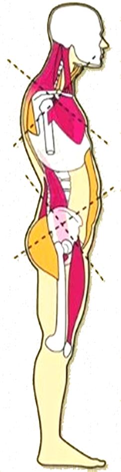 telesna drža - stanje hrbtenice